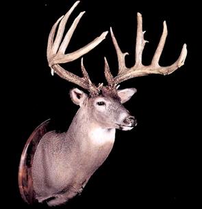 Breen Buck