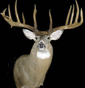 Whitewater Buck
