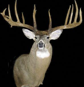 Whitewater Buck