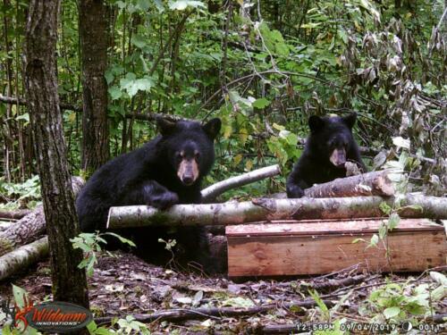 Lynsey Gallion_Effie MN_black bear 507.421.6329